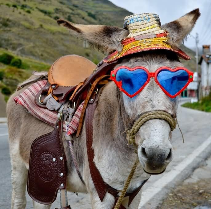 Donkey-With-Heart-Shape-Sunglasses-Funny-Face-Picture-For-Whatsapp.jpg