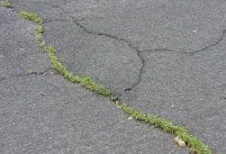 Weeds-breaking-through-a-tarmacadam-surface.jpg.0b4b4e33185b0c0e3892105a5ac695be.jpg